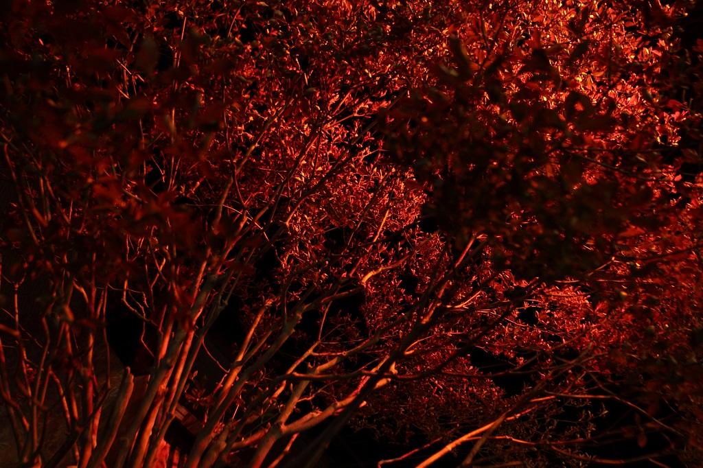 縁側と紅葉|NENOUWASA/ねのうわさ