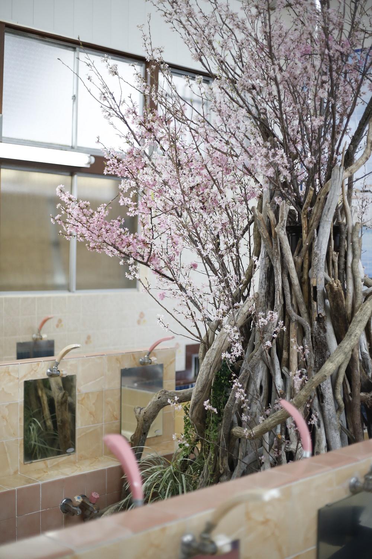 銭湯花見2013|NENOUWASA/ねのうわさ