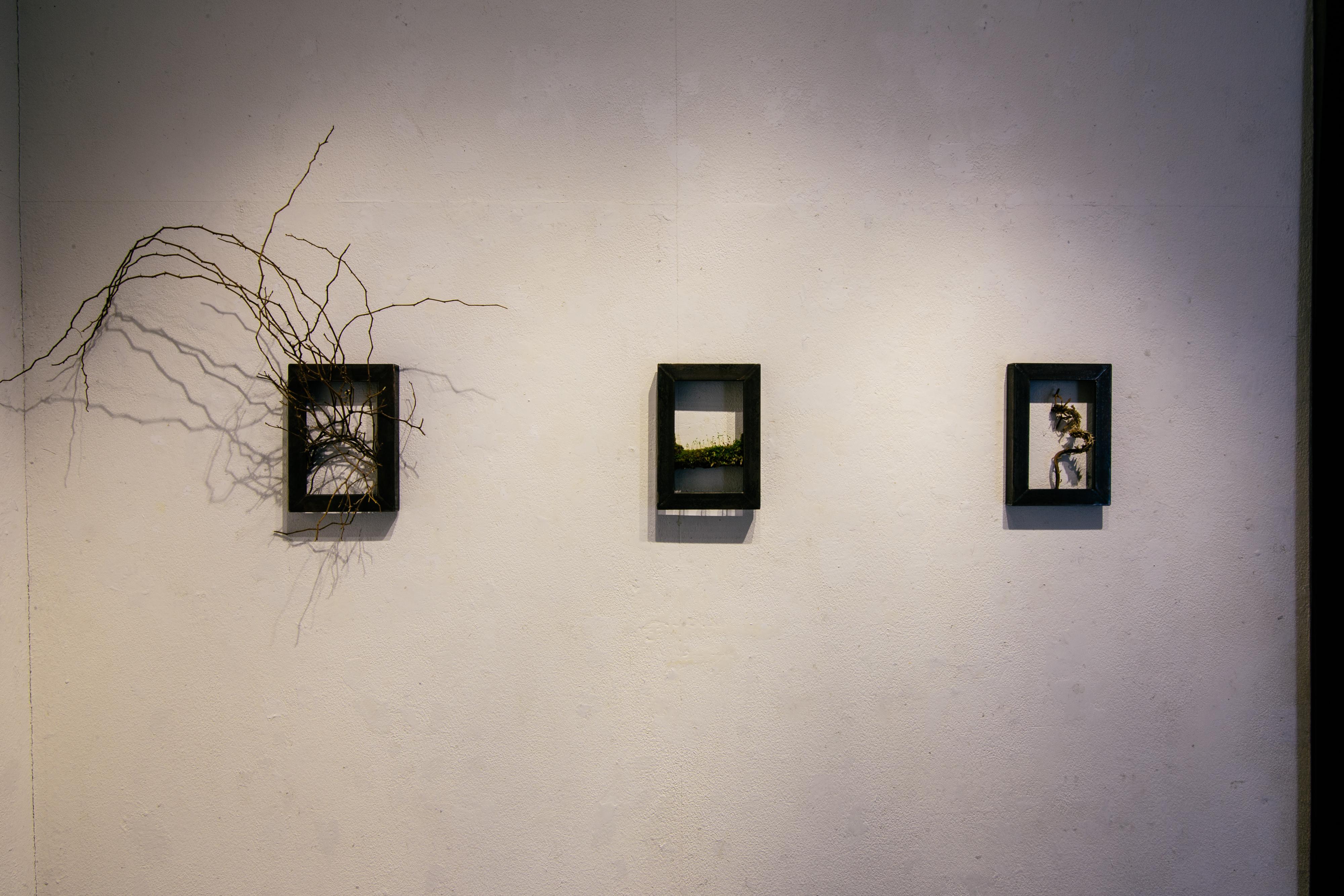 目 ~ 展示「ただの」~|NENOUWASA/ねのうわさ