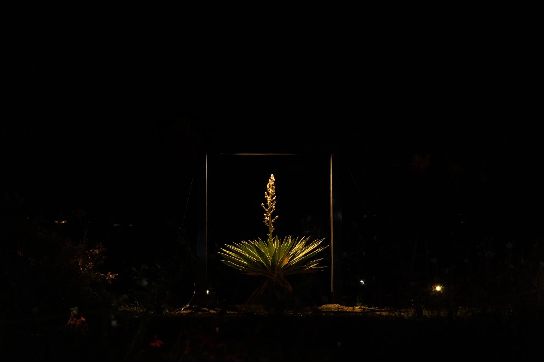 備北イルミ 〜希望の花〜|NENOUWASA/ねのうわさ